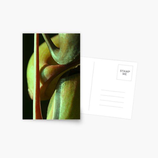 vegetal sensuality Postcard