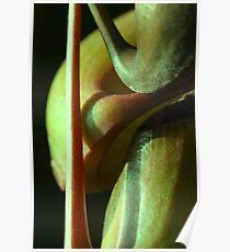 vegetal sensuality Poster