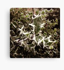 Frosty Holly Canvas Print