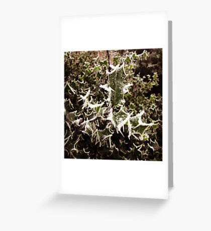 Frosty Holly Greeting Card