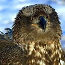 Young Eagle by Mike Shero