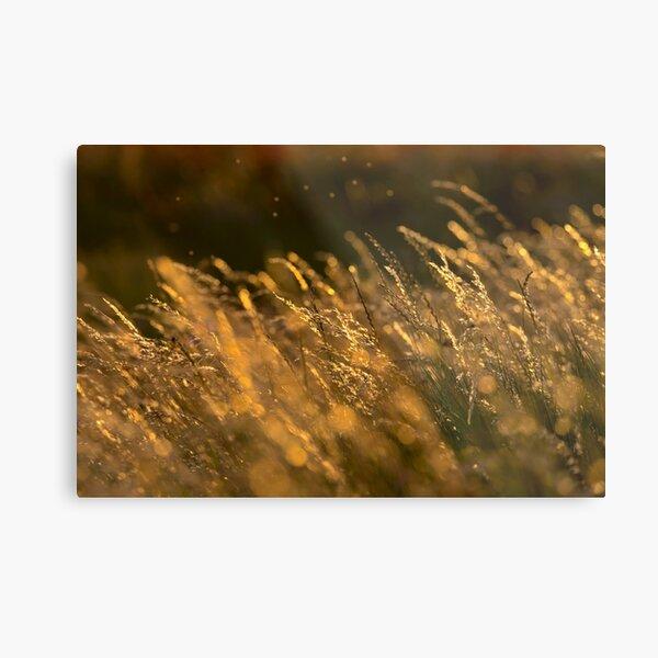 Summer Grasses 2 Metal Print