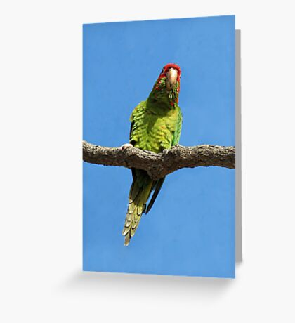 Hanging Around In Manhattan Beach Greeting Card