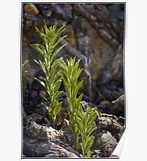 Plant Growing on Rock Formation at Coppins Crossing Poster