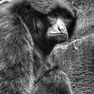 The Stare B&W by Kathy Baccari