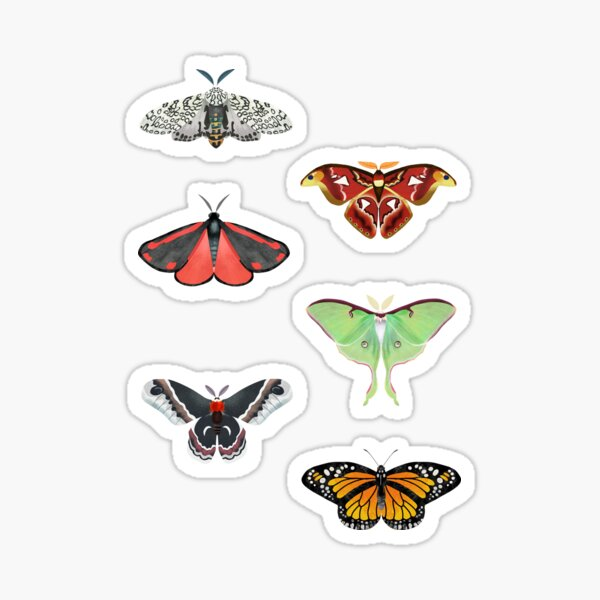 Some moths and a butterfly sticker pack Sticker