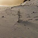 Shadows, Window Pane Bay by tasadam