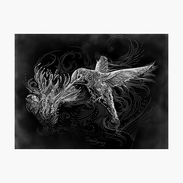 Hummingbird and Flower White Line Design Photographic Print