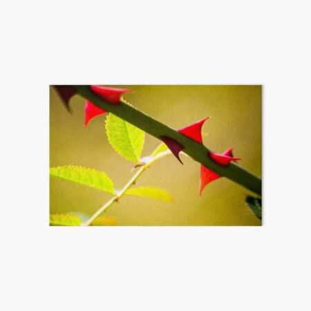 Lime green rose leaves with red thorns Art Board Print