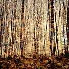 Multiple forest by jul-b