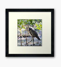 Wild heron in kenya Framed Print