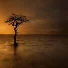 Light & Rain by Brian Kerr