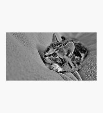 Little MillieMac..... Hunter Photographic Print