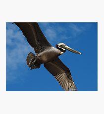 I'm Flying Like A Bird Through The Sky - Estoy Volando Como Un Pajaro En El Cielo Photographic Print