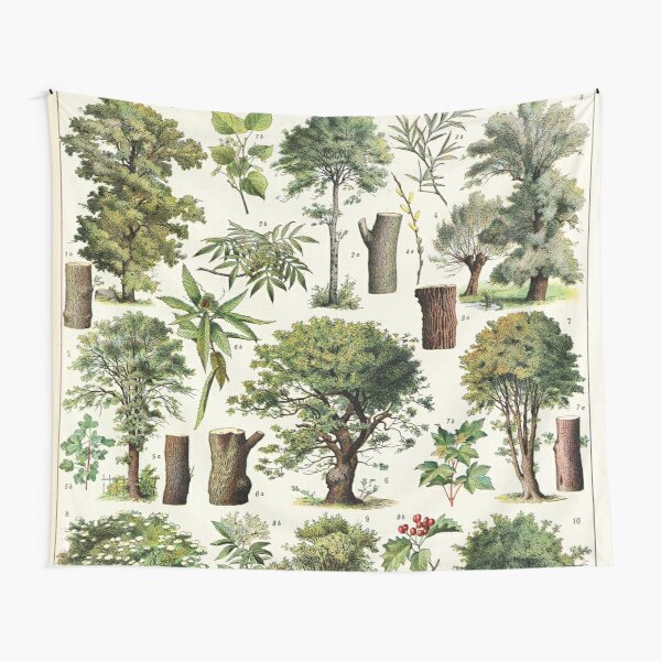 Adolphe Millot - Arbres A - French vintage botanical poster Tapestry