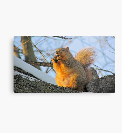 We Take the Nut Very Seriously Metal Print