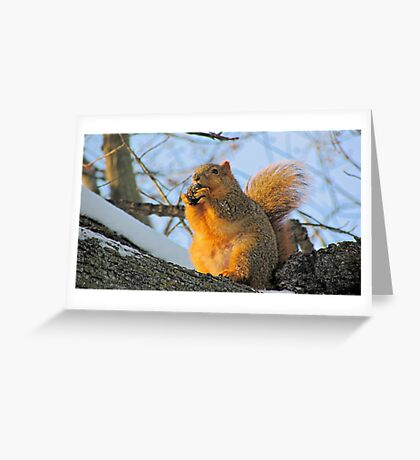 We Take the Nut Very Seriously Greeting Card