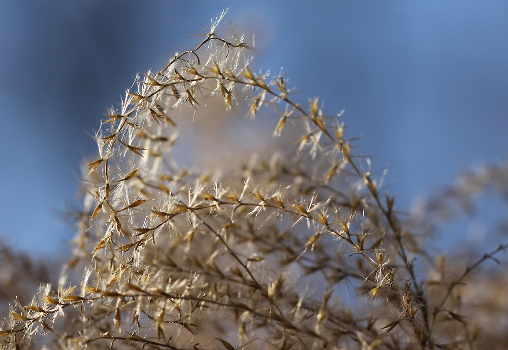 Grass Seeds by Lynn Gedeon