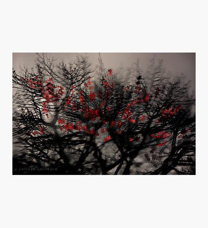Dissembling Photographic Print
