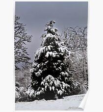 Southern Illinois Winter Scene 5_ Dec 2012 Poster