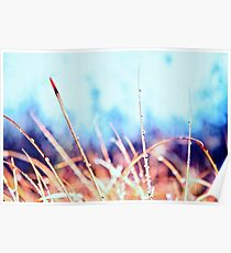 Rain on kangaroo grass. Poster