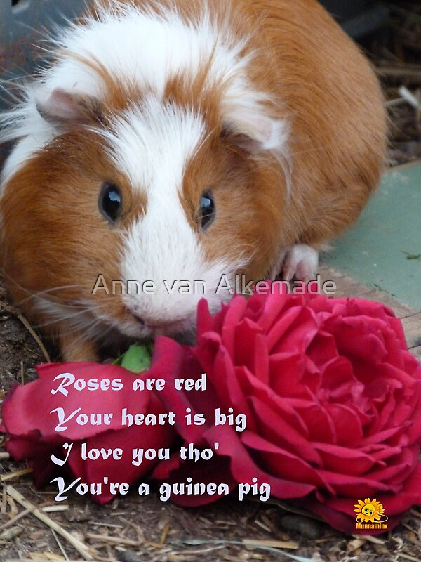 Guinea Pig Valentine Greeting Cards by Anne van Alkemade – Hamster Valentine Cards