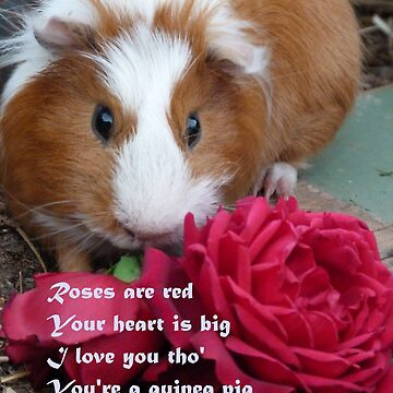 Guinea Pig Valentine by Munnaminx