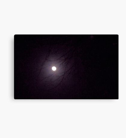 Moonlight through the Trees Canvas Print
