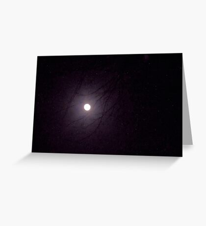 Moonlight through the Trees Greeting Card
