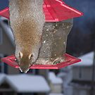 My squirrel must be hungry by Tammy Rooker