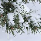 Snow falling on trees by Chris  Brewer