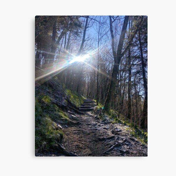 Sun Shinning on the Appalachian Trail  Canvas Print