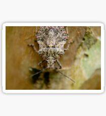 Stink Bug Sticker