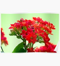 Tiny Red Flower  Poster