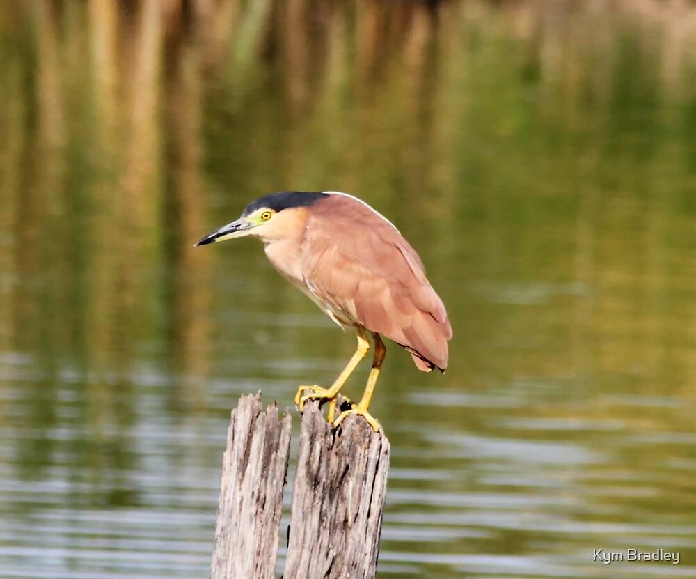Night Heron  by Kym Bradley