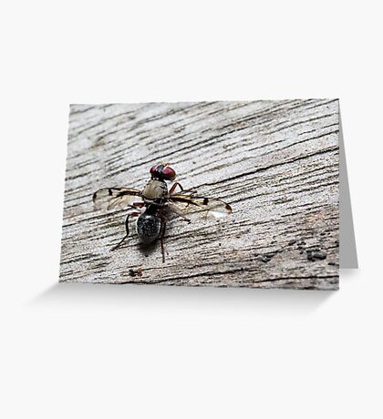 Picture-Wing Fly Greeting Card