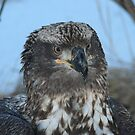 Young Eagle 4 by Mike Shero
