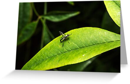 Wasp or Fly (unknown) by Colin  Ewington