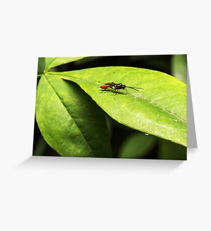 Wasp (unknown) Greeting Card