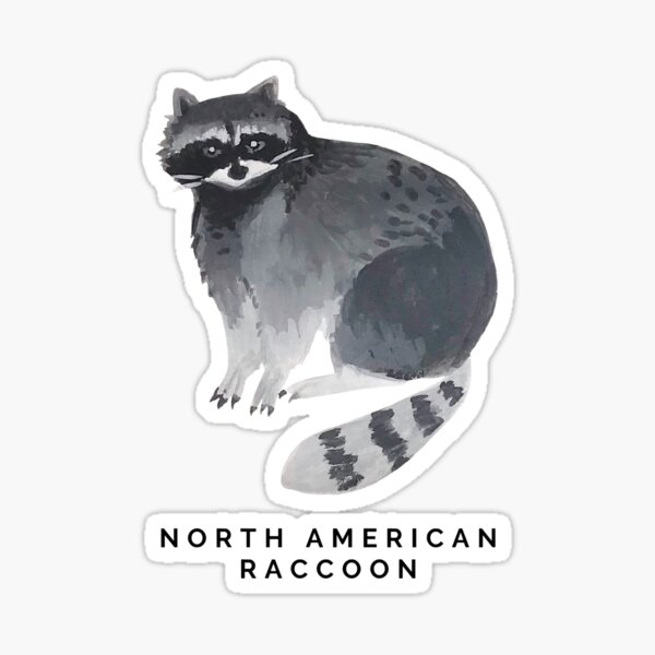 North American Raccoon Sticker