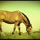 Horse with no saddle by RockyWalley