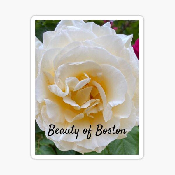Yellow Garden Rose Sticker