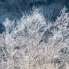 Frosted Trees by Jim Stiles