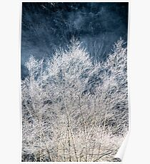 Frosted Trees Poster