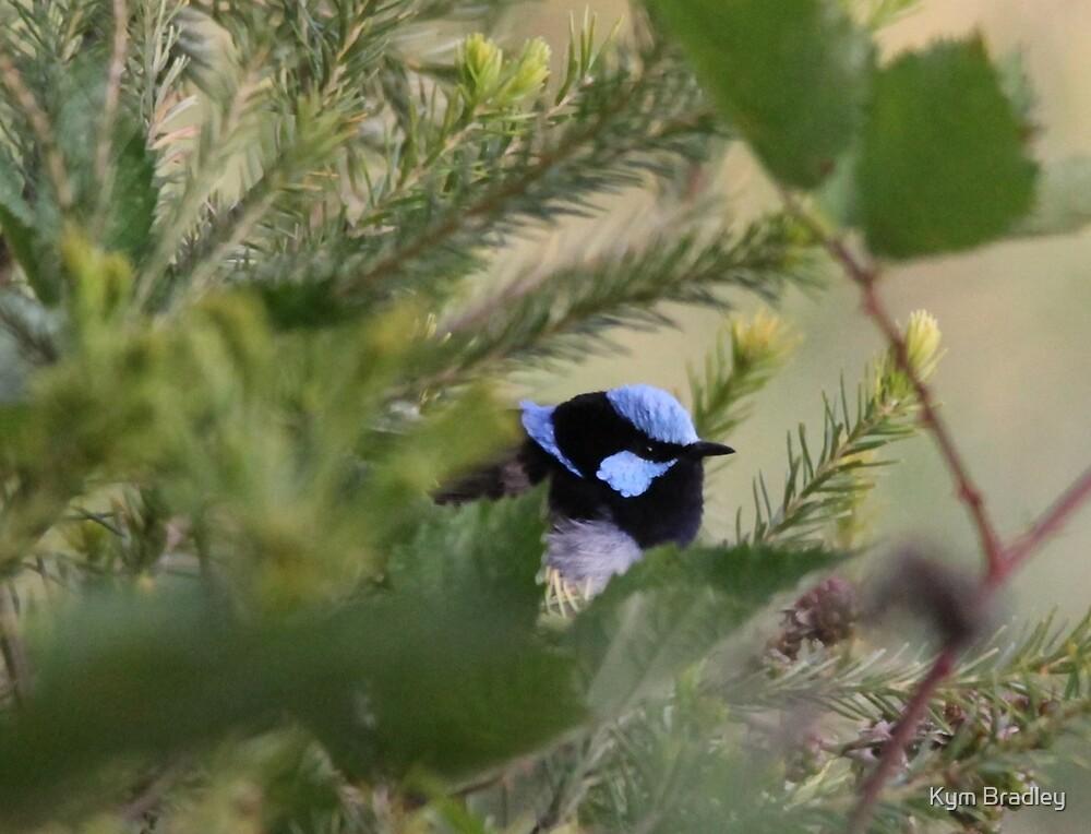 Blue Wren Hiding behind the Blackberries by Kym Bradley