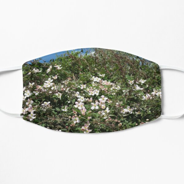 Blossoms of Spring - Montana Clematis Mask