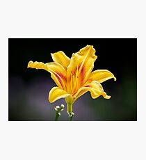 Alone Yellow Flower Photographic Print