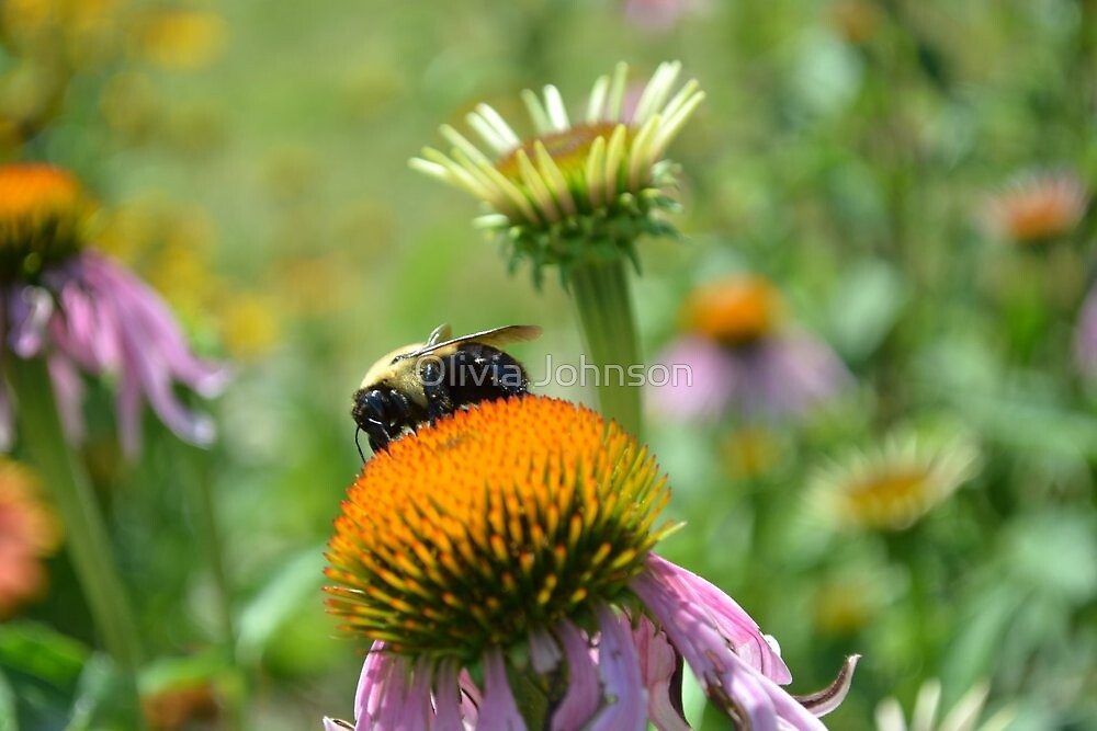 Bumble Bee's Delight by Olivia Johnson