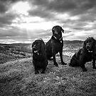 Black Trio by Mark Cooper