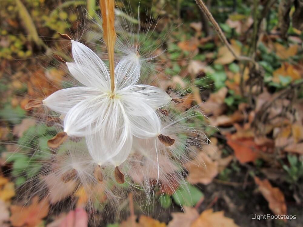 Fairy Milkweed Seeds by LightFootsteps